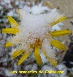 fleurs de neige (6)