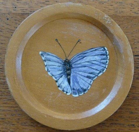 papillon argus (sous-verre bois) - CélinArtisa