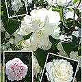 Fleurs 2009-2010 (43)