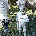 Pâques à la campagne