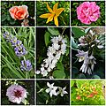 Open-Live-Writer/Au-menu-_10BA6/jolies fleurs_thumb