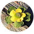 09 fleur verte