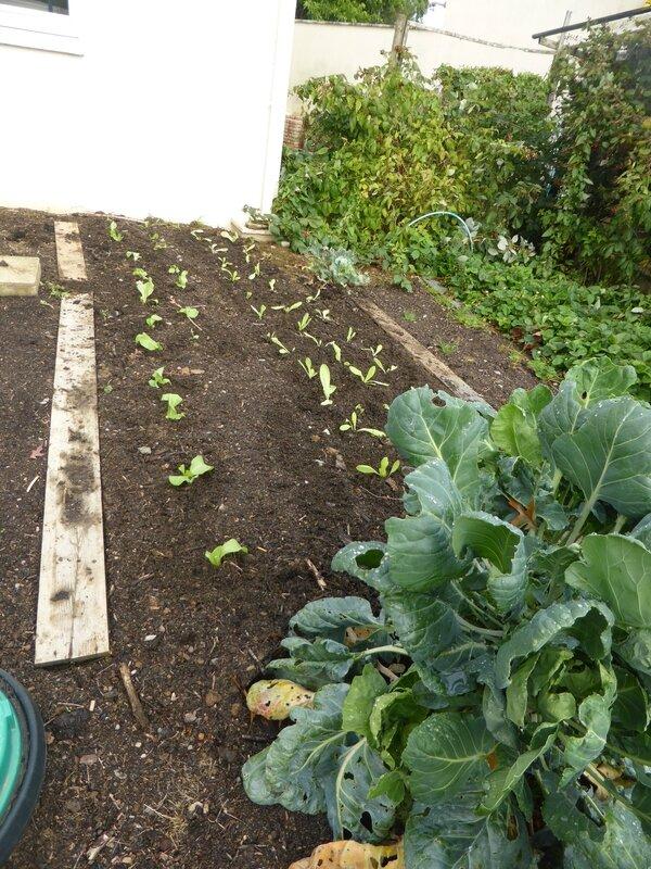 19-salade-plants (2)