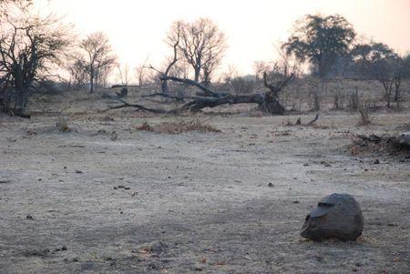 Zambie (743)