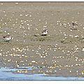 trois promeneurs sur la plage