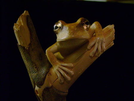 treefrog_007