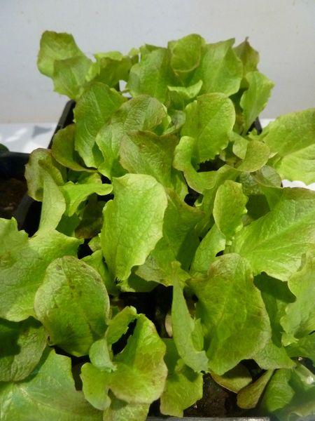 20-plant (3)