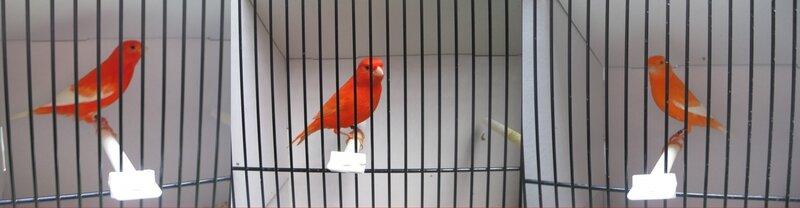 compo oiseaux 5