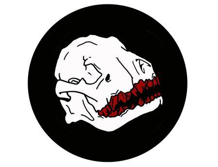 crâne 3