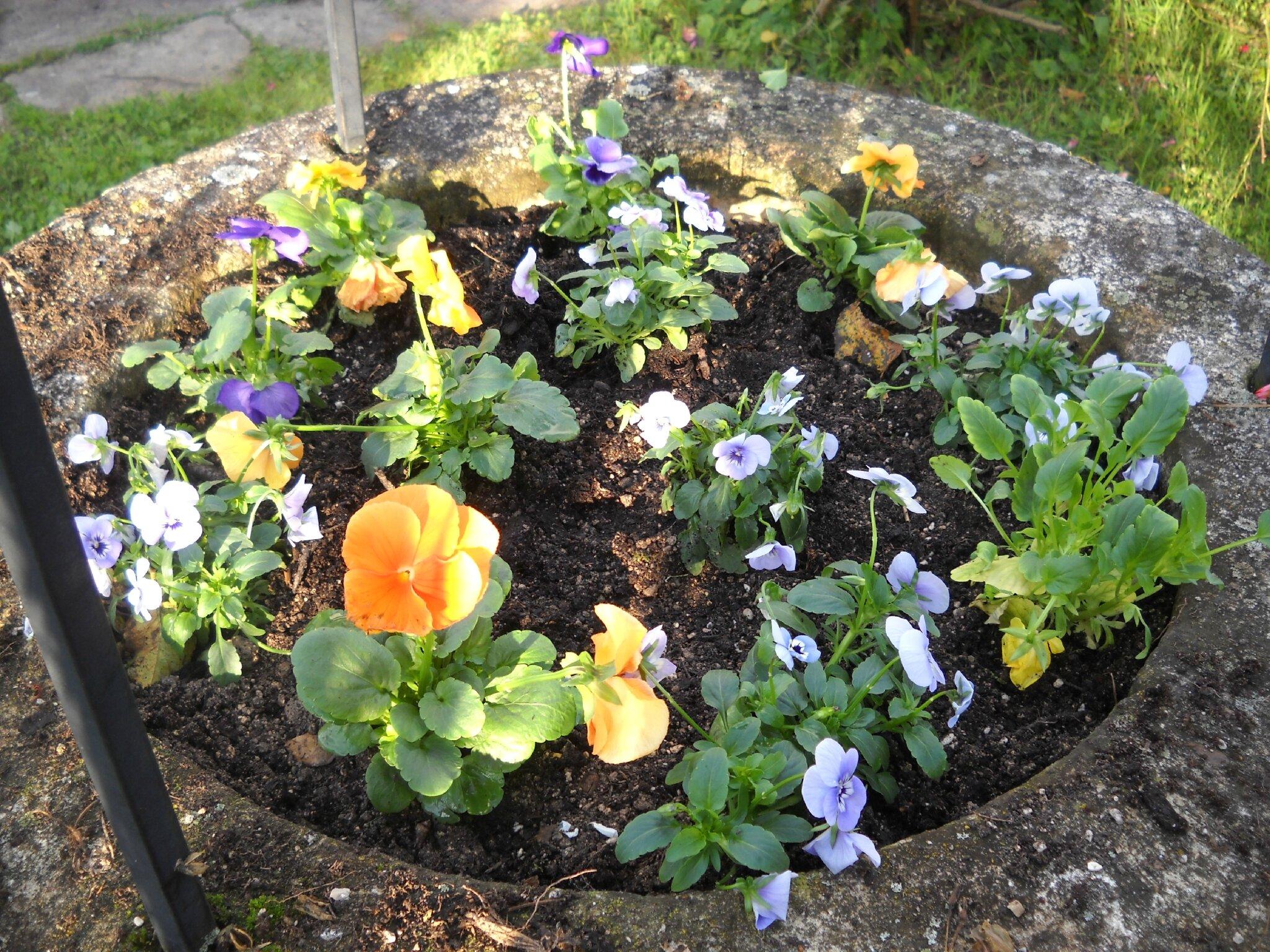 Plante grasse qui fleurit for Plante au jardin