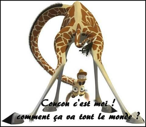 Coucou_n