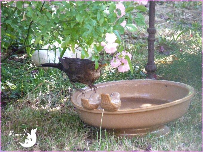 bain merlette 1