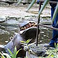 Amneville zoo 24