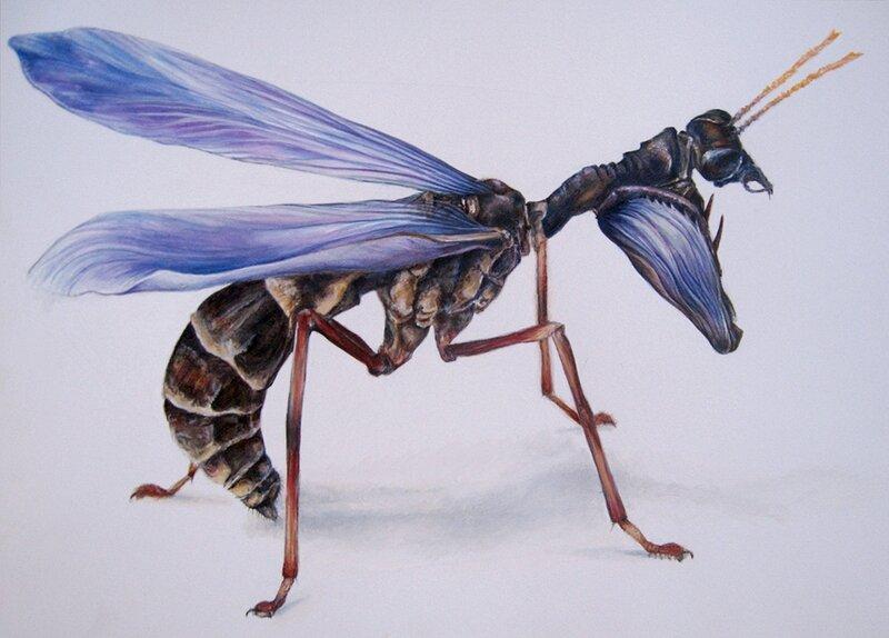 MantispaCrocus-RaymondQueneau