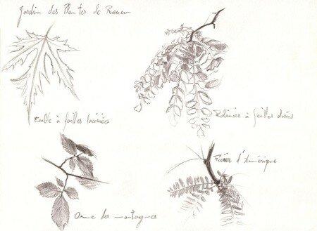Feuilles_Jardin_des_Plantes