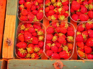 Fraises_bio__tal_du_march__saint_aubin