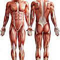 L'hypotonie musculaire chez l'enfant ou l'adulte autiste : quelles sont les possibles conséquences pour le corps