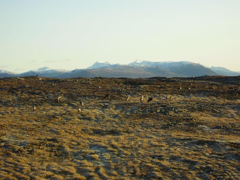 17-10-08 Sortie Montagne et rennes (110)