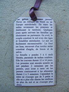 Verso G