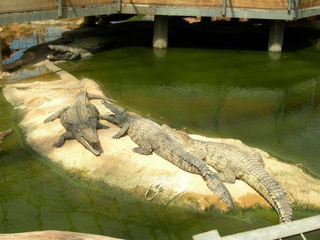 crocroc