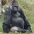 Le parc zoologique de st martin la plaine (42)