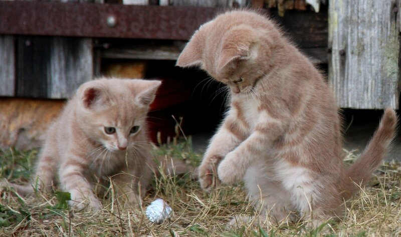 chatons et balle