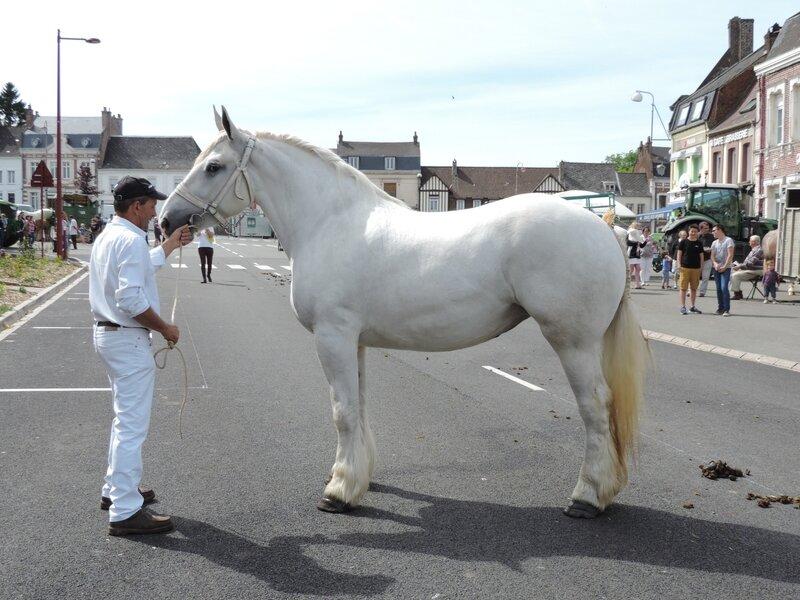 Duchesse de Nordal - 3 Juin 2017 - Concours d'élevage local - Fruges (62) - 2e (Non Suitées)
