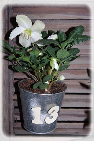 calendrier_plantes_028_modifi__1