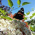Papillon Mannequin