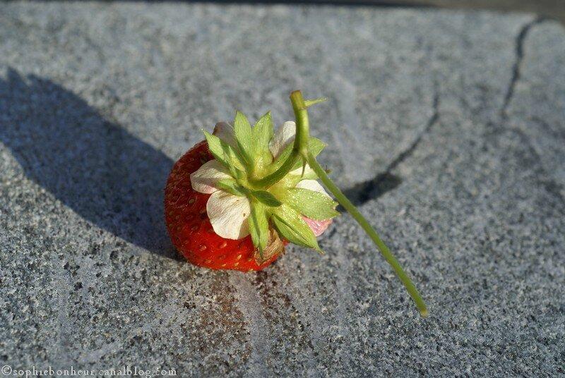 fraise pétales