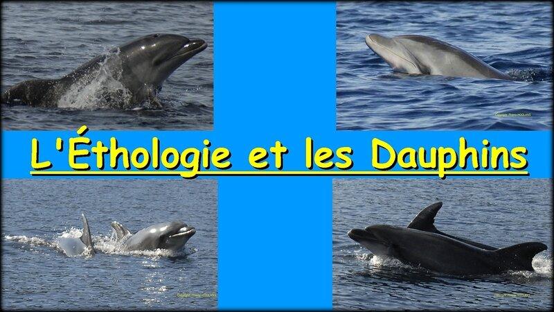 1411191808_diaporama_ethologie