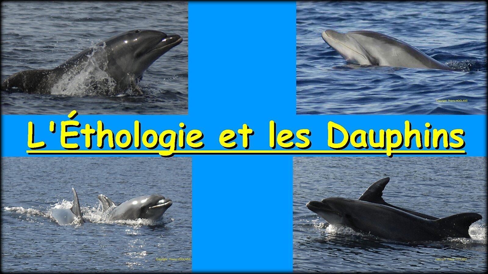 ÉTHOLOGIE ET DAUPHIN / THIERRY HOOLANS !...