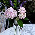 Hortensias roses et lavande