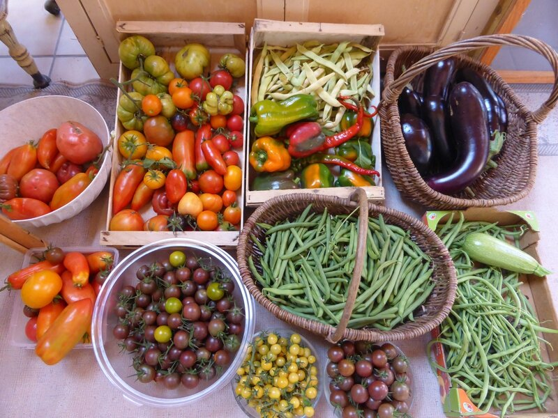 12-récolte du jour (1)