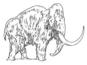 Mammut_Meyers
