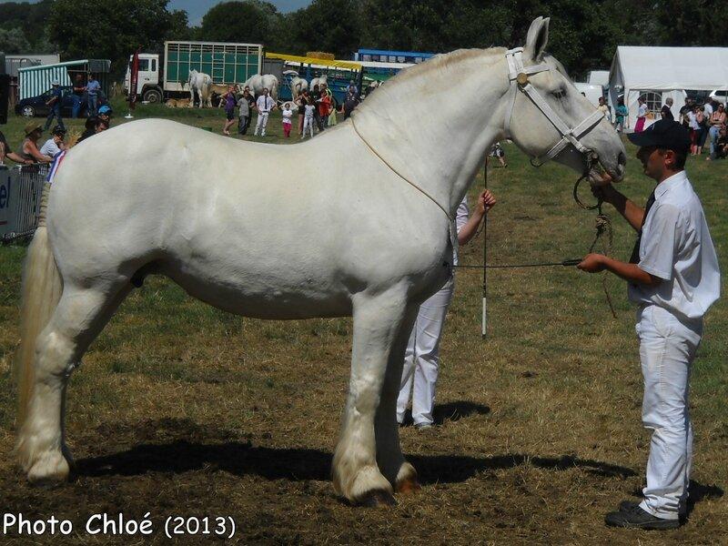 RIKITA de l'Ecurie - Concours National - Samer (62) - 27 juillet 2014 - 1ere (Coupe Challenge des Juments)