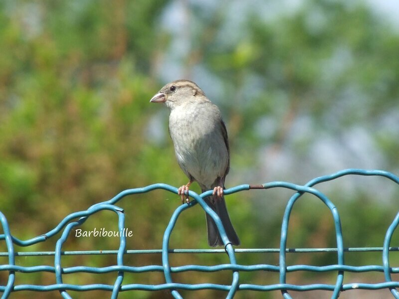 oiseau07 Mai16