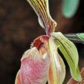 Exposition d'Orchidées 2011
