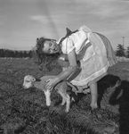 1945_meadow_sitting_sheep_by_dd_mmad129