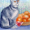 chat aux oranges