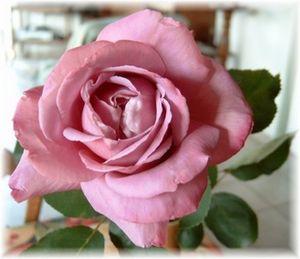 rose_f10