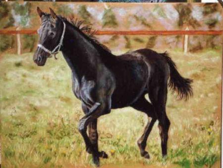 cheval_pour_cibers_carte