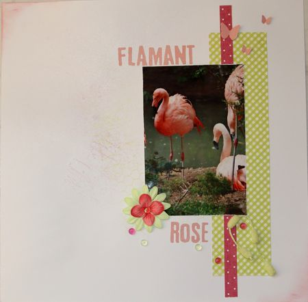 flamant_rose