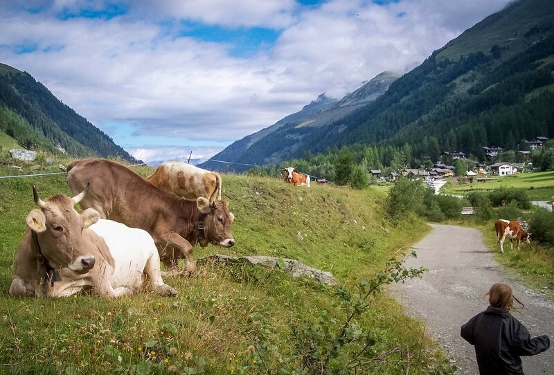 Zinal vaches5