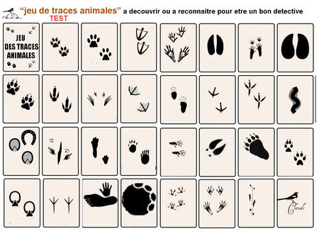 jeu_de_traces_animalieres_TEST
