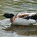 RELAX LES CANARDS !