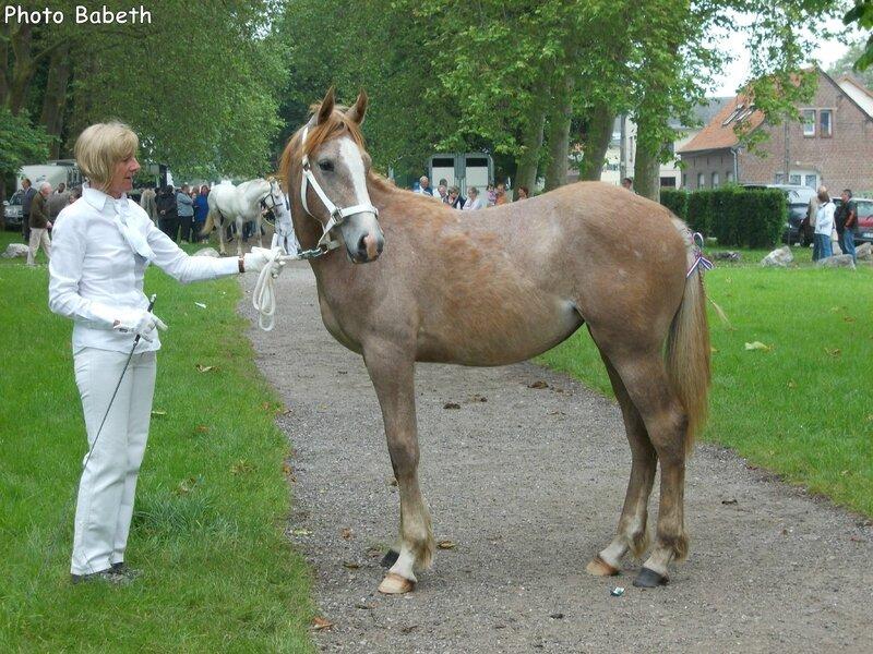 Duchesse duMaré deTer (AraboBoulonnaise) - Concours élevage local - Rue (80) - 1er Juin 2014 - 1ere