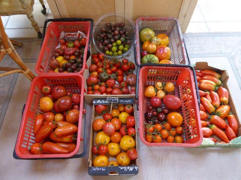 30-tomates du jour (9)