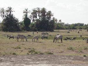 Amboseli_1
