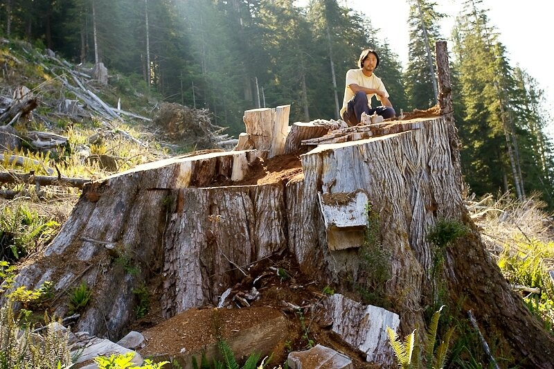 Walbran_Giant_Stump-7
